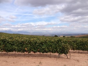 I'm cycling through the heart of the Rioja wine growing region.  Passing me by, every few minutes, are proud vinyard owners taking their grapes by tractor and trailer to the local cooperative factory for processing.